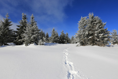 Trail on winter field in forest