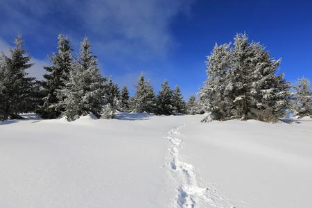 Trail on winter field in forest