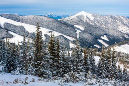 snow scene: nice winter scene in mountains