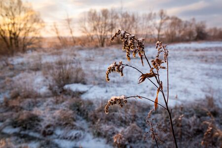 twig: frozen twig on morning meadow Stock Photo