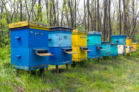 apiary: apiary in forest at spring time