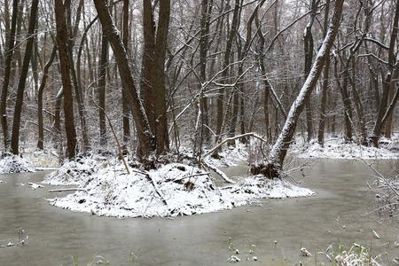 bog: landscape with snow-covered bog in spring forest Stock Photo