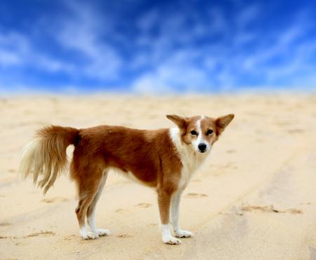 head in the sand: fanny red head dog on sand sea beach Stock Photo
