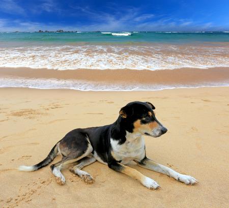 fanny: fanny dog rest on ocean beach Stock Photo