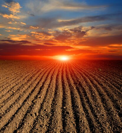 the ploughed field: landscape with sunset over agricultural ploughed field