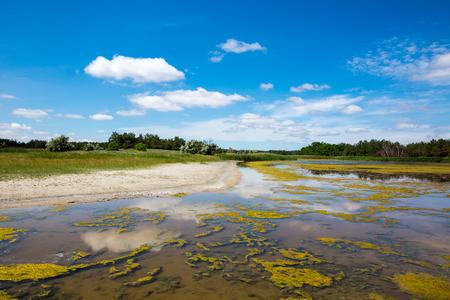 bog: Summer scene with bog in steppe