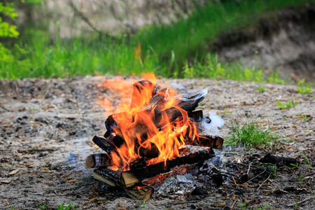 campfire: campfire on meadow in green forest at sunny spring day
