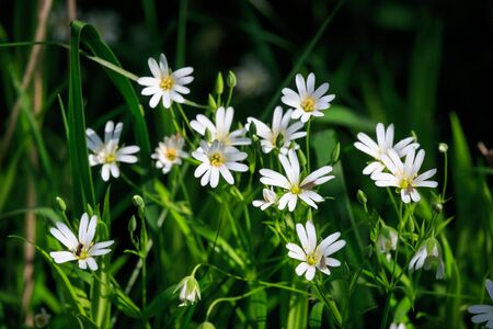 wild grass: nice small wild flowers in green grass Stock Photo