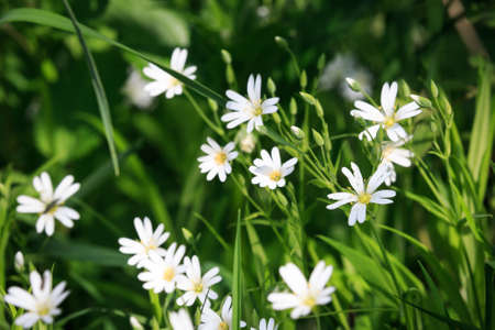 wild meadow: wild flowers among green grass of summer meadow Stock Photo