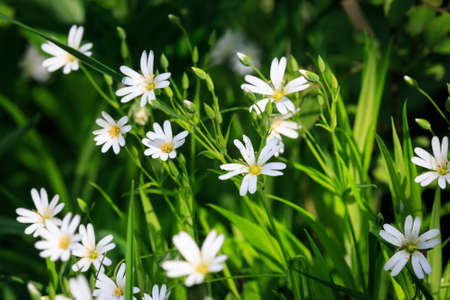 wild grass: wild flowers on spring meadow in green grass Stock Photo