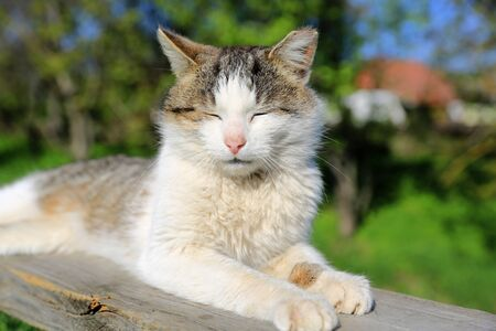 unworried: Funny cat sleeping outdoors at nice sunny day