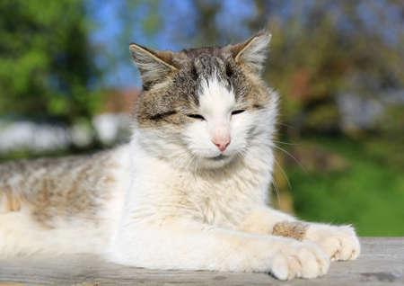 suny: Fuuny cat rest outdoor at suny day