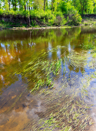 limpid: Summer scene with plants in water near river bank Stock Photo