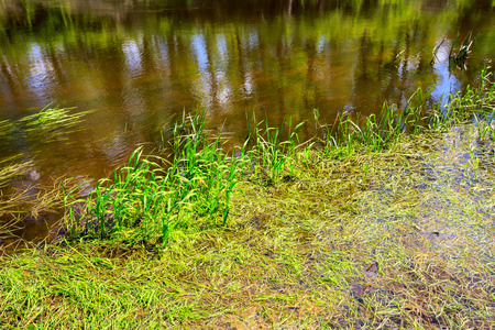 limpid: green plants in water near river bank