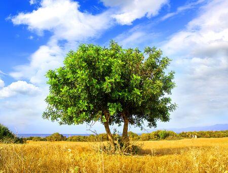 Allein grünen Baum auf trockener Wiese