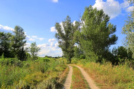 rut: summer landscape with rut road in steppe Stock Photo