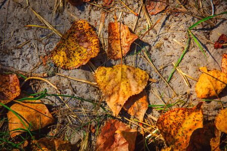 leafage: autumn leafage on soil - abstract natural background Stock Photo