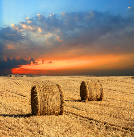 hayroll: evening landscape with hay rolls on meadow Stock Photo