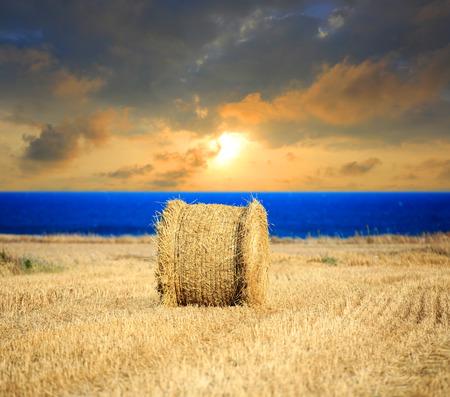 hayroll: evening sunset scene with hay roll on farming field near sea