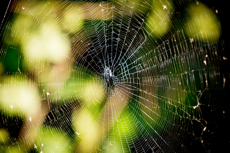 Abstract web in autumn forest