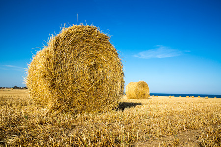 Landscape with hay rolls on autumn field
