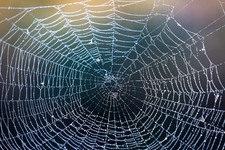 abstract wet web in morning forest Stock Photo