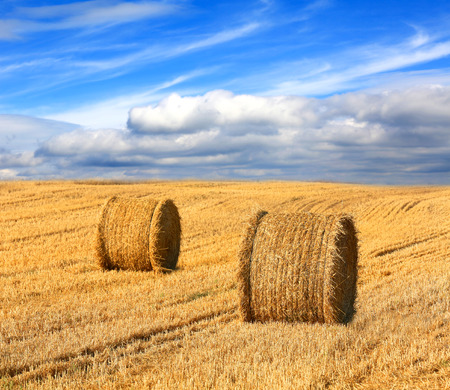 Landscape with hay rolls on farming field under nice clouds in sky Stock Photo