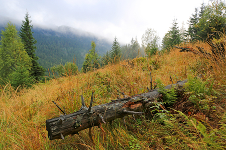 old pine log on mountain meadow among wet grass Stock Photo