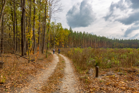 rut road in autumn forest Stock Photo