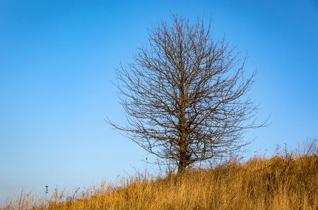 abstract leafless tree on autumn meadow against blue sky