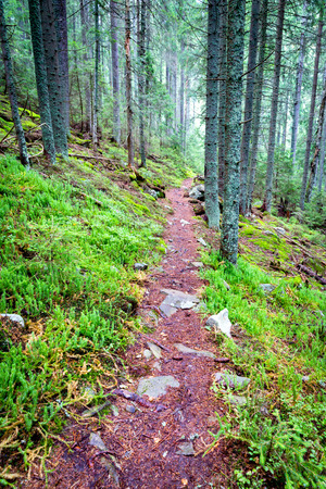 landscape with pathway in green forest Stock Photo