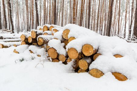 snow-covered pine wooden logs in forest Stock Photo
