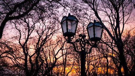 sky brunch: street lantern in evening park on tree brunches background Stock Photo