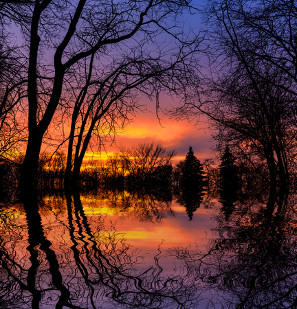 Abstract trees in water on sunset sky background