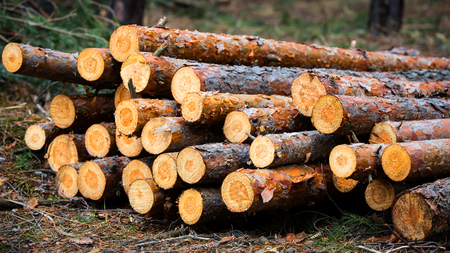 absract wooden logs in forest