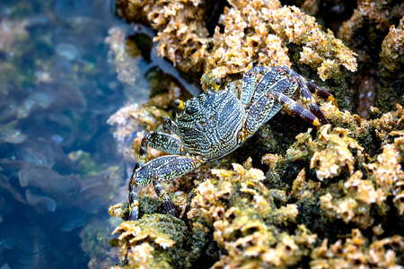 Little crab among the corals on the sea Stock Photo