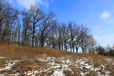 Spring landscape with leafless trees on meadow Stock Photo