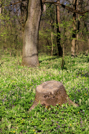 old wooden stump among wild flowers in forest