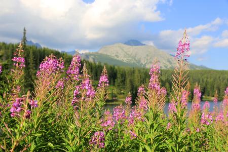 Nice wild flowers in mountains Stockfoto