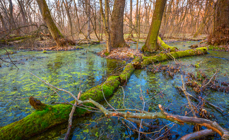 Landscape with green moss on old dead woods in swamp Фото со стока