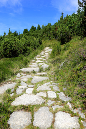 stone pathway in green forest in mountains, Slovakia