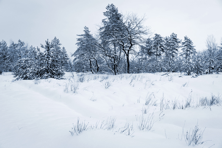 winter meadow under snow in forest 스톡 콘텐츠