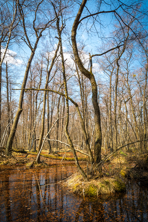 spring time in flooded forest Stock Photo