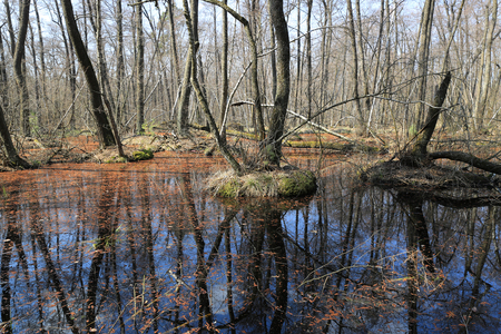 scene with flooded forest in spring time