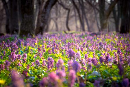 Bonito prado de flores en el bosque en primavera Foto de archivo