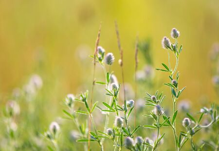 nice abstract wild flower meadow