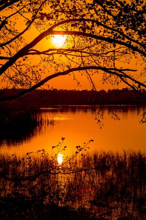 sunset on lake. view through trees twigs. Autumn landscape