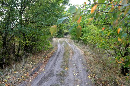 Dirt road in forest. Autumn landscape.