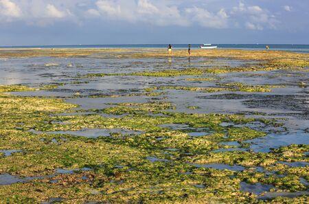 View on ocean shore at mornin low tide, Zanzibar