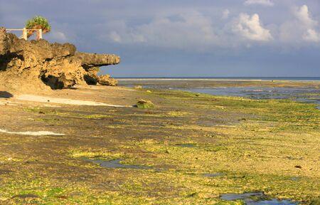 Morning landscape with ocean shore at low tide, Zanzibar